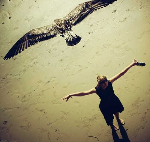 beach-bird-color-accent-composite-girl-photography-Favim.com-40872