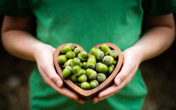 acorns-green-hands-heart-mood-hd-wallpaper